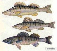 Сладковское товарное рыбоводческое хозяйство подписало с немецкой компанией соглашение о поставке оборудования...
