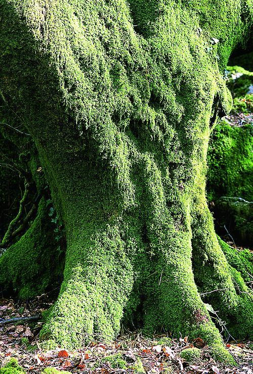 Если приснился мох на плодородной почве - значит, вас будут славить и... Если во сне вы увидели мох - значит...